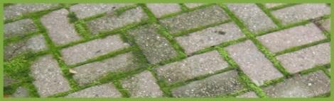 Green_brick_2012-08-03