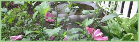Green_Bird bath_2012-08-01
