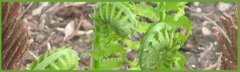 Green_ferns_2013-03-31