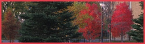 Red_trees_2013-30-17