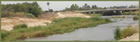 Green_LA River