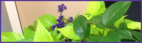purple_philo