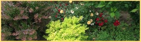 orange_bushes