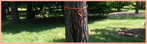 orange_ribbon tree
