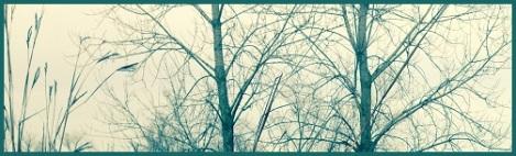 green_bare trees
