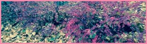 Pink_autumns