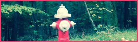 red_hydrant in woods
