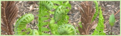green_ferns
