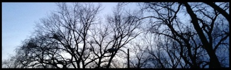 Black-bare trees