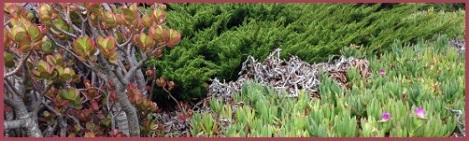 red-vegetation