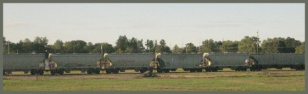 gray_coal-train_2012-08-26