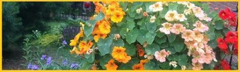 yellow_hanging flowers