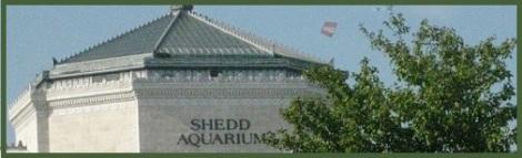 Green_Shedd Aquarium_2012-08-03