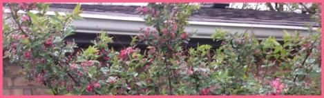 red_bush water beads