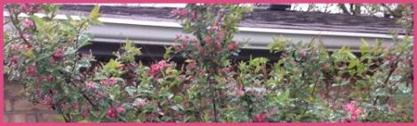 red_bush