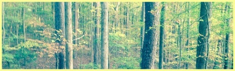 yellow-NC forest