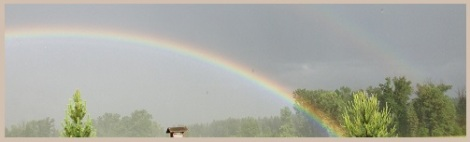 pink_rainbow