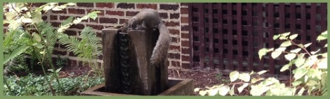 green_squirrel