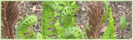 green_ferns